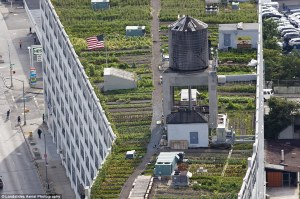 Queens rooftop farm