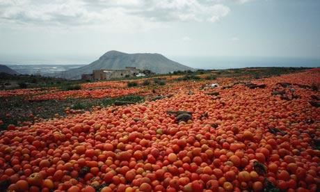 Food-waste-Surplus-tomato-003