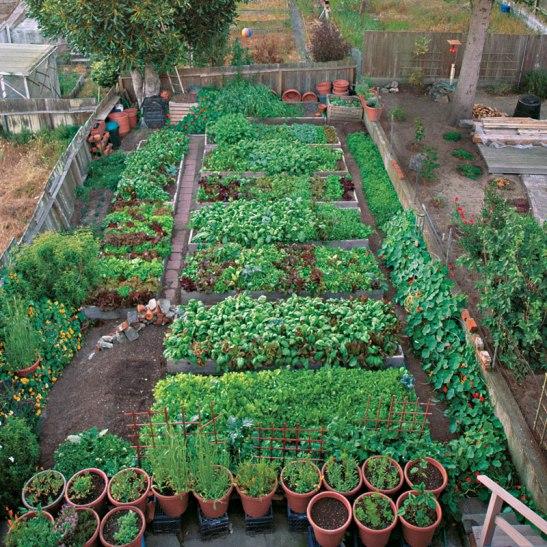 Urban garden in San Francisco